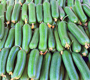 organic Greek cucumbers for salad and tzatziki
